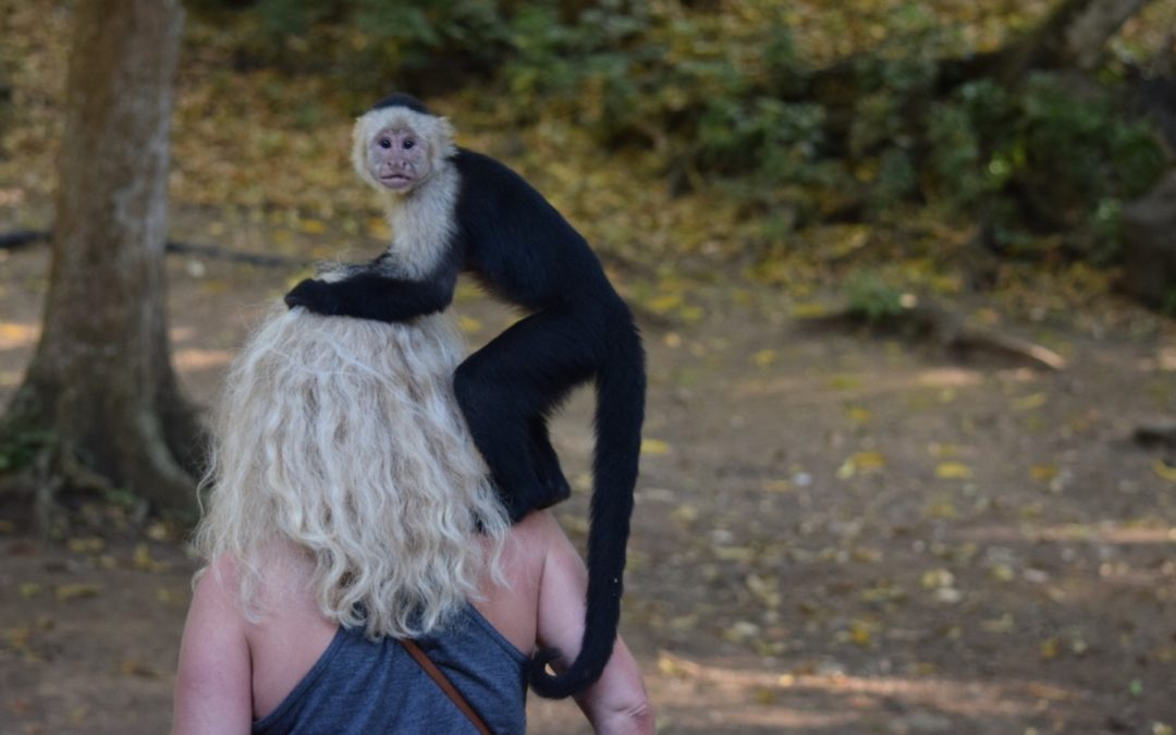 Get the Monkey Off Your Back and Get Your Game On